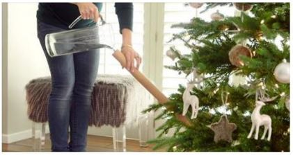 christmas tree watering trick